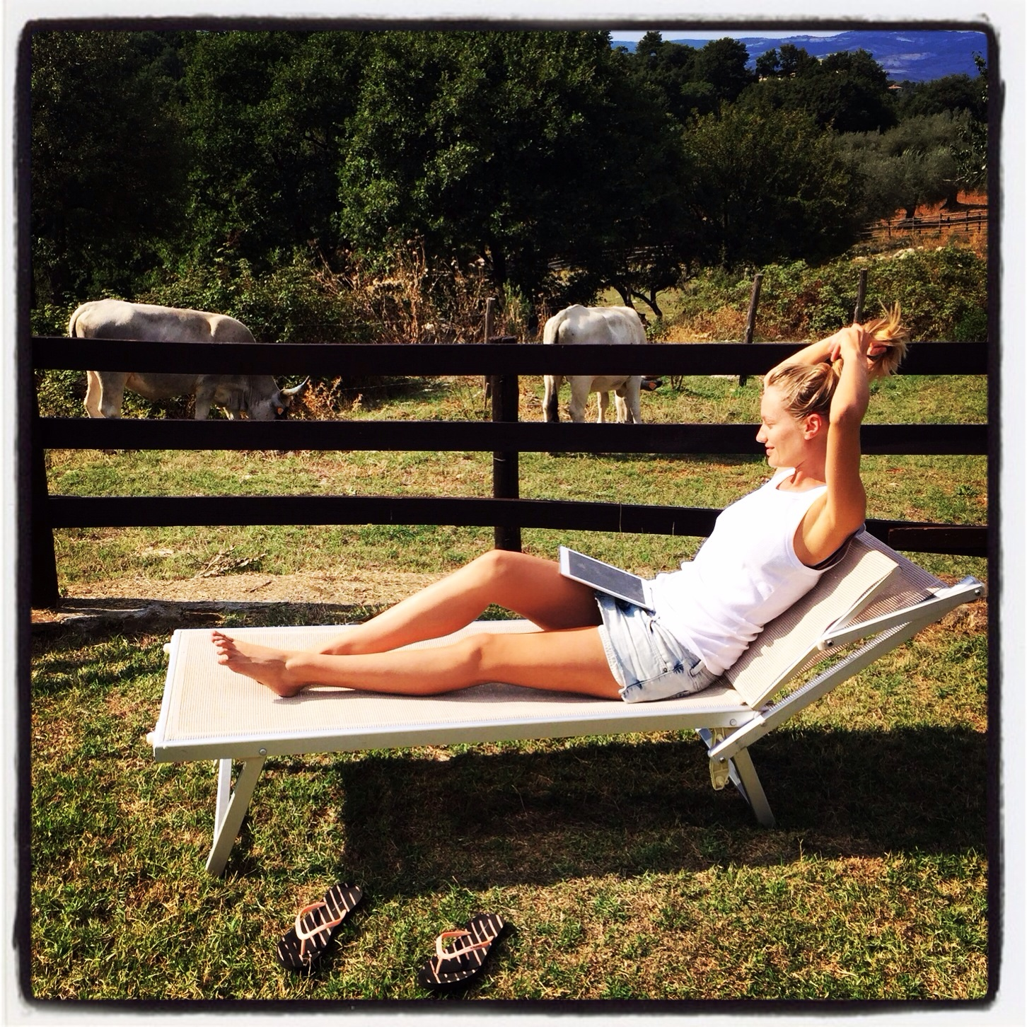 My office in Tuscany. Cows keeping me company while writing my post.